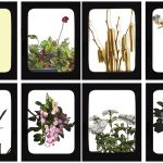 Urban Medicine, 2019  A lantern artist's book based on lantern slides from the Brooklyn Botanic Garden. Six page spreads digitally printed, hand-cut, mounted on foam core and backed with mulberry paper. 4.75 x 6.25, edition 20