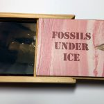 Fossils Under Ice Boxed